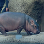 Cincinnati Zoo backlash over tweet of Fiona sign at Women's March