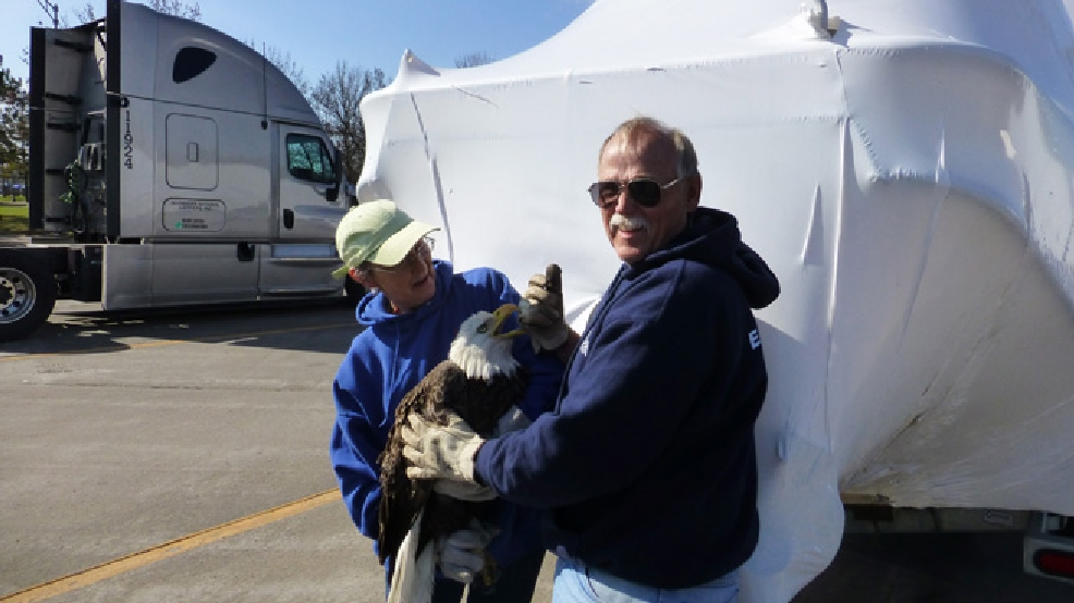 This Friday, April 25, 2014, photo shows Patti Stangel of Wildlife Rehabilitation and Release, Inc. and Scott Kregness with a bald eagle at a rest stop in Menomonie, Wis. The bird crashed through the Kregness' boat's shrink wrap earlier that day as it was traveling along Interstate 94. Stangel said that after the bird is examined it will be released. (AP Photo/Courtesy Marilyn Kregness)