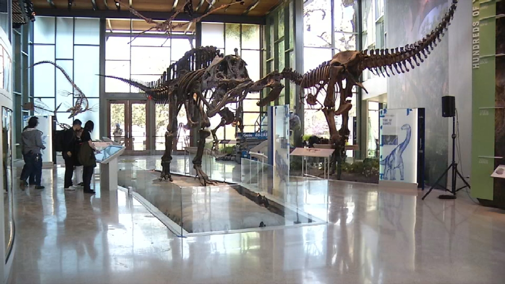 Dinosaurs New Exhibits To Greet Visitors At New Witte
