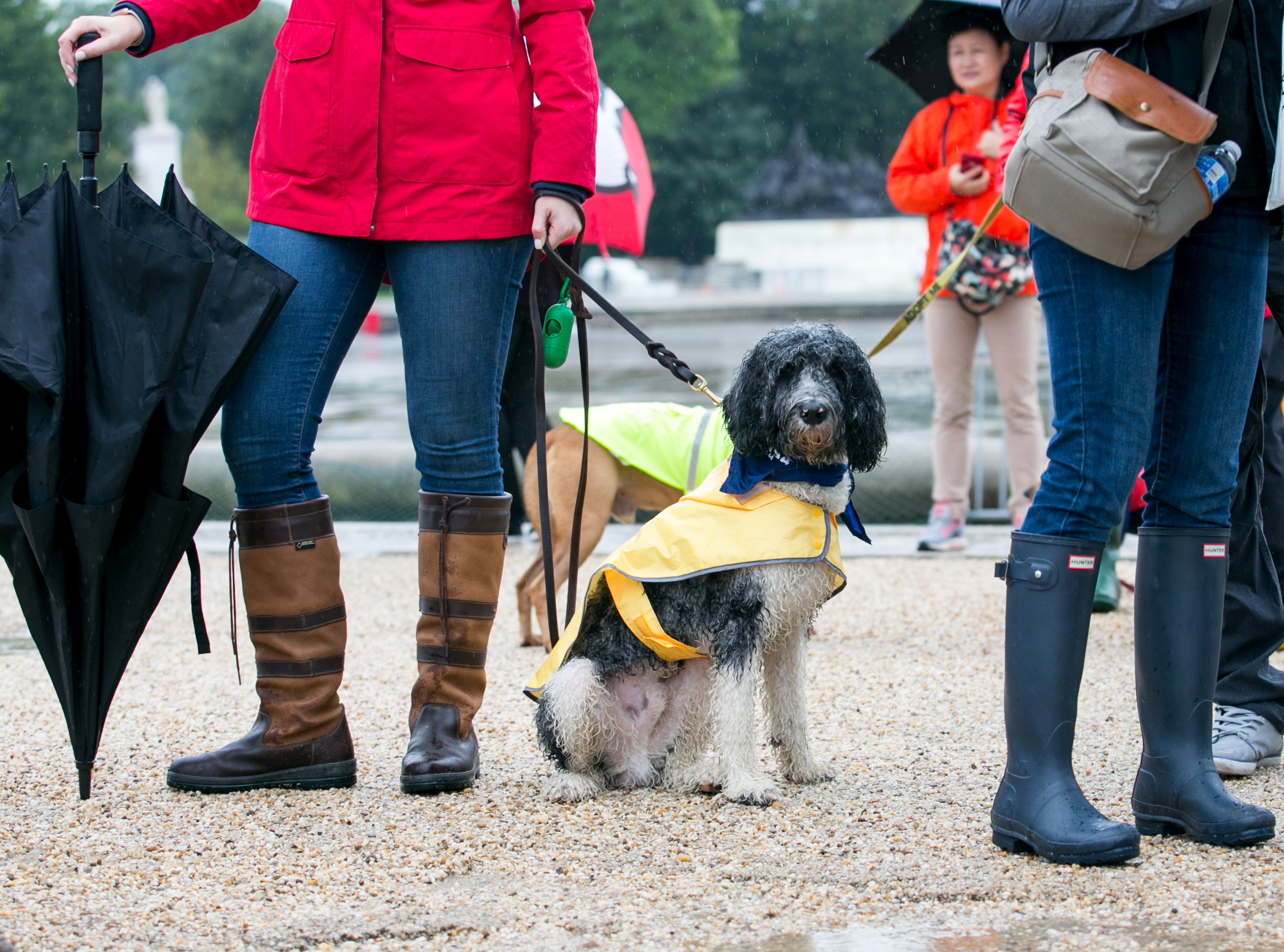 "Despite the never-ending rain, the second annual Bipawtisan March brought dogs from both sides of the aisle together to march from Capitol Hill to 'yappy hour' at Wunder Garten for beer and pup-friendly treats. The event, organized by a female-run non-profit WeTheDogsDC, had approximately 100 participants and raised $10,000 for more than 30 rescue organizations around town. According to the organizers, ""the mission of the Bipawtisan March is to show that no matter what side of the aisle you stand on, the love we have for our pets transcends all political agendas and is a cause that we can all support."" Attendees were encouraged to don costumes showing what they were marching for and to carry family-friendly signs. 100 percent of the event proceeds were donated to rescue organizations. (Image: Carina Thornton/ DC Refined)"