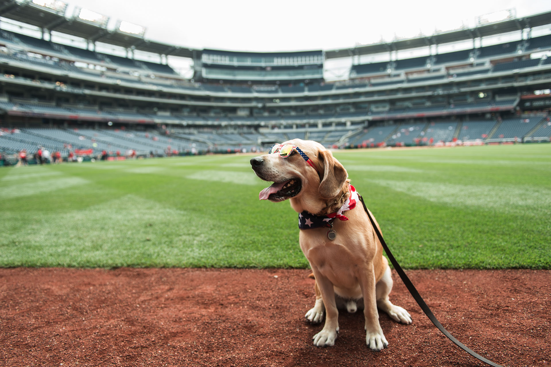 The Nationals may not have triumphed over the Phillies on Saturday, June 23, but the game truly went to the dogs during Pups in the Park. The special event allows dogs roam over the baseball field before the game. (Photo{ }Courtesy of the Washington Nationals Baseball Club)