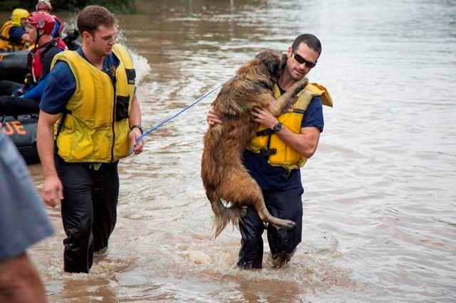 The Austin Fire Department told the Huffington Post they saved dogs from floodwaters because they 'don't just rescue two-legged victims'