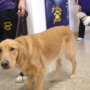 Inmates give back to the community through service dog training program