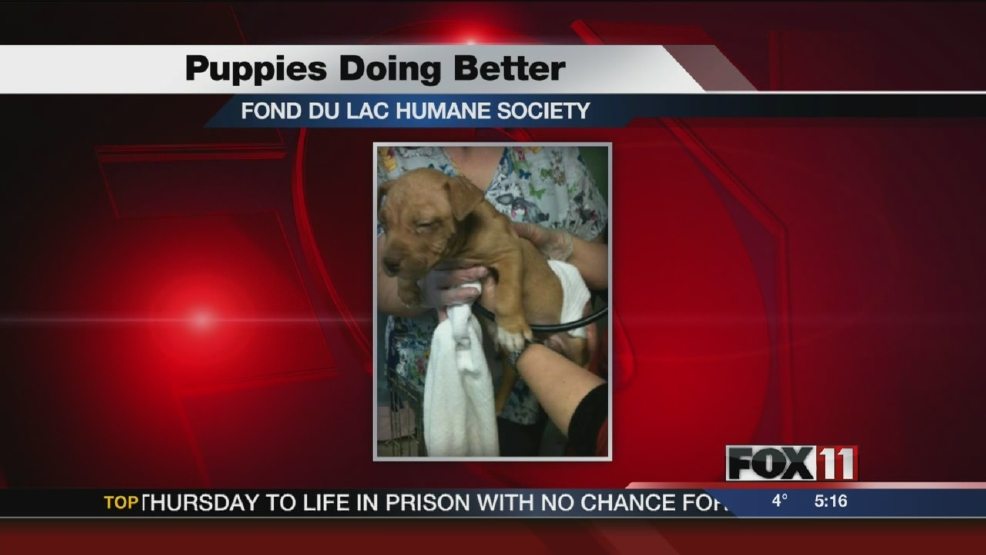 Fond du Lac puppies improving