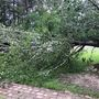 Part of tree falls during storm, lands on Suburban near Kountze