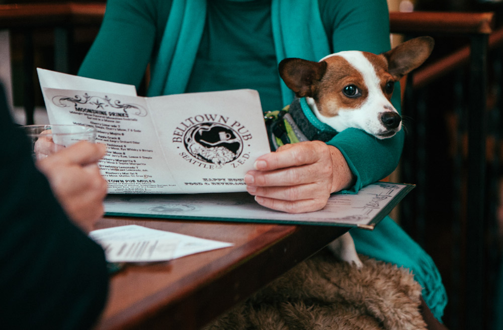 "People and dogs came out to Yappy Hour at the Belltown Pub yesterday to benefit the Seattle Animal Shelter Foundation.  Drinks like ""Whisker Sours"", ""Cosmeowpolitans"" and ""Springer Spritzers"" were served (to the humans), while pups noshed on treats. (Image: Joshua Lewis / Seattle Refined)"