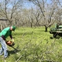 Central Texas pecan growers fear a trade war with China