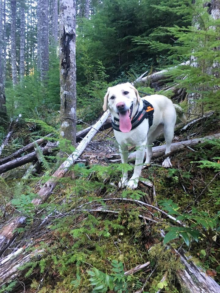 'One of our K9 teams working in Tillamook County' - Tweet from Mountain Wave Search and Rescue 4.jpg